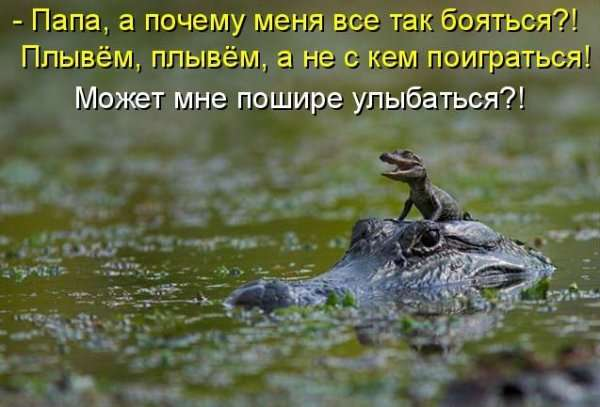 Животные с подписями (42 фото)