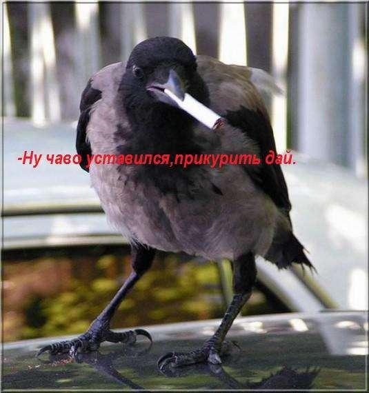 Подборка приколов (47 фото)