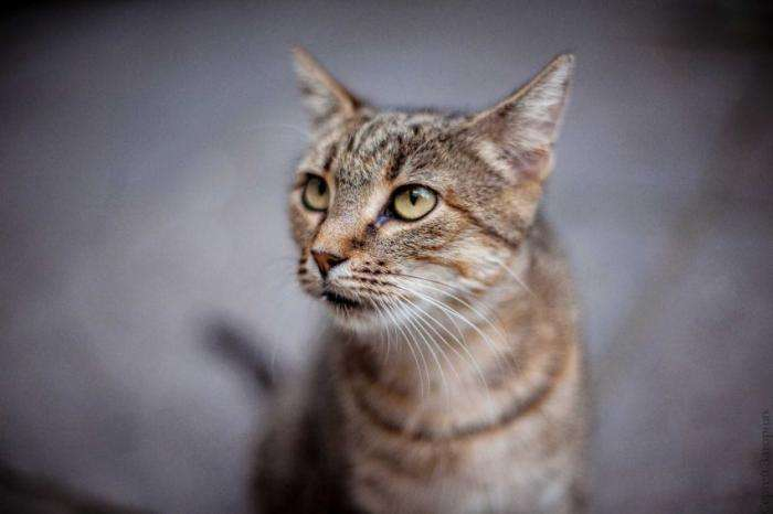 Одесские коты (19 фото)