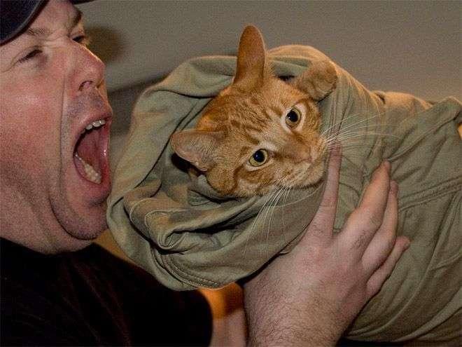 Кошачья шаурма (20 фото)