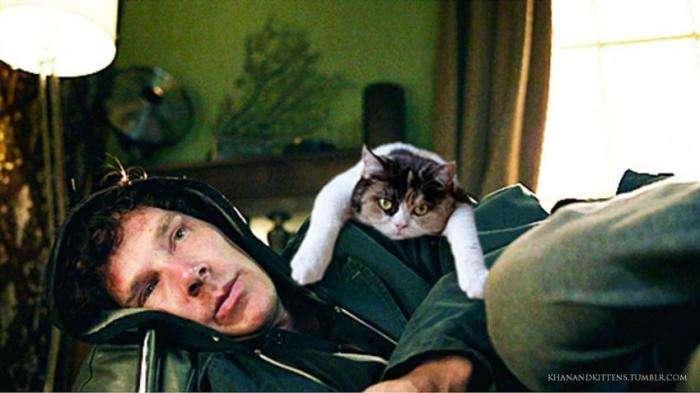 Все лучше с котятами (43 фото)