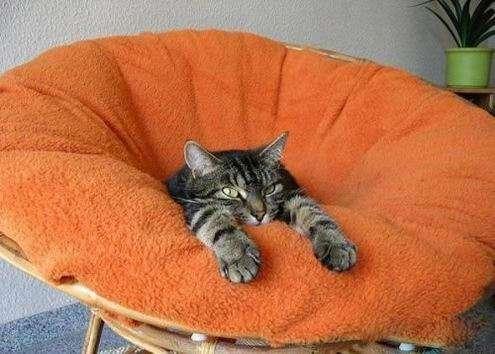 Прикольные котяры (49 фото)