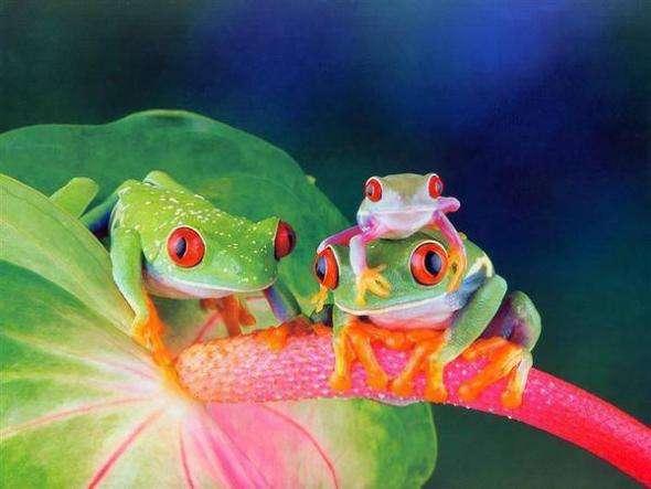 Поднимаем себе настроение вместе с животными (26 фото)