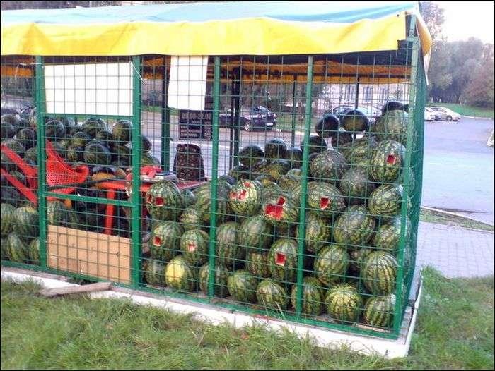 Торговая палатка с арбузами осталась без присмотра (4 фото)