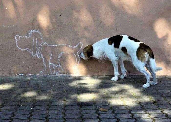 Точно подобранные фотографии собак (24 фото)