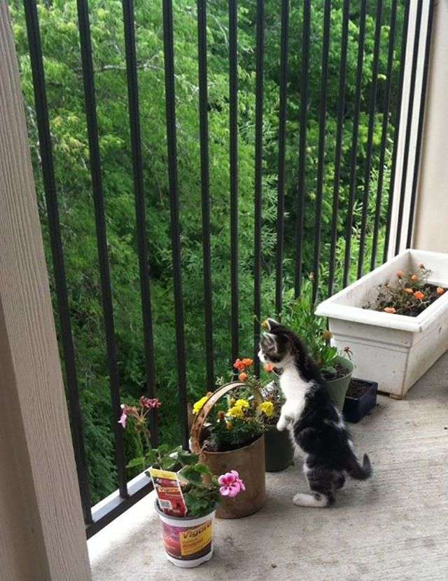 Коты в шоке (20 фото)