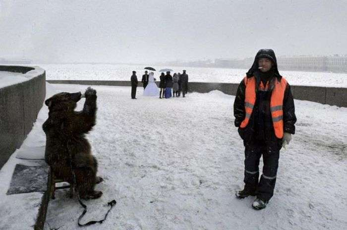 Медведи на улицах России (34 фото)
