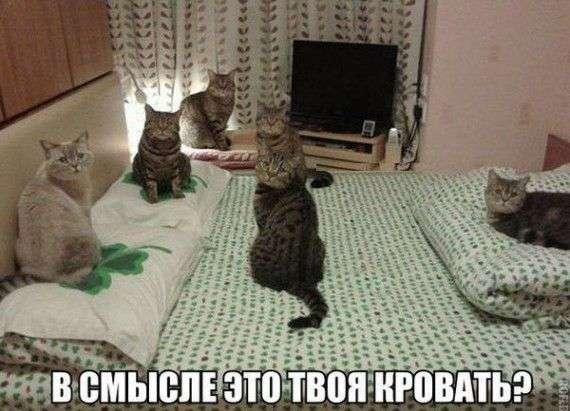 Кото-пост (25 фото)