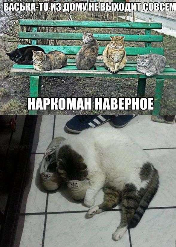 Картинки со смешными подписями (31 фото)