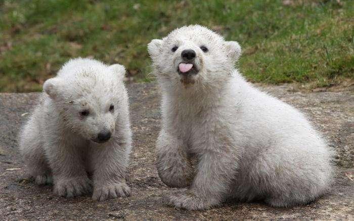Милые и забавные животные (35 фото)