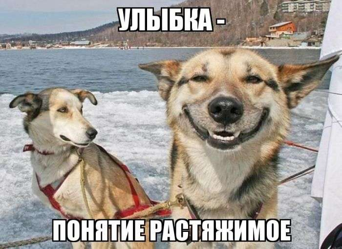 Подборка прикольных фото №964 (100 фото)