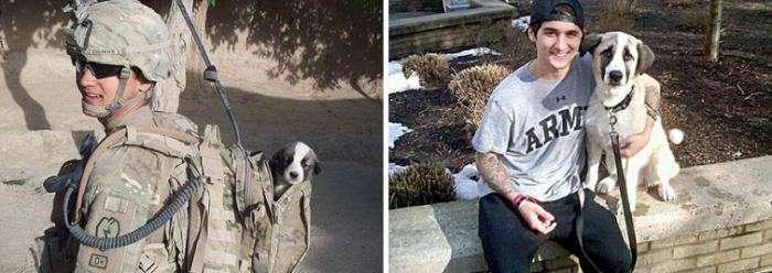 Щенки, выросшие во взрослых собак в стиле