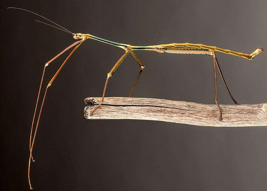 Самые большие насекомые на Земле насекомые,природа,познавательно,размеры,рекорды