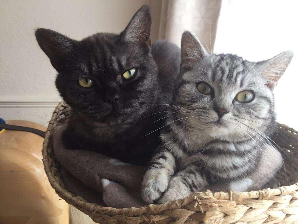 Размножение кошек в домашних условиях зверушки,живность,питомцы,Животные