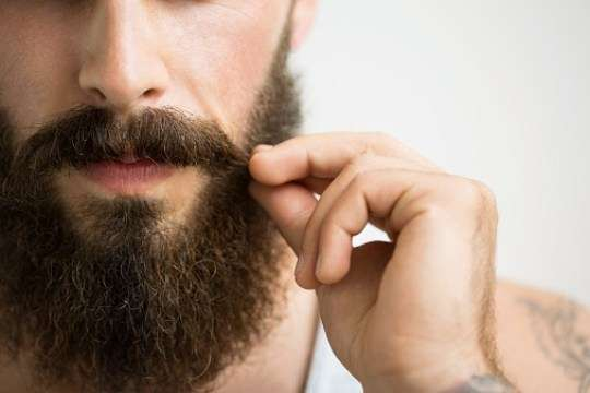 Побрейтесь немедленно! Согласно научным исследованиям, в мужской бороде больше микробов, чем в шерсти собак зверушки,живность,питомцы,Животные