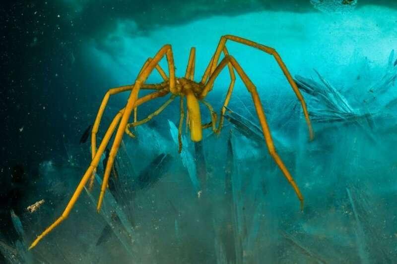 Удивительный мир, скрывающийся подо льдами Антарктиды   Интересное