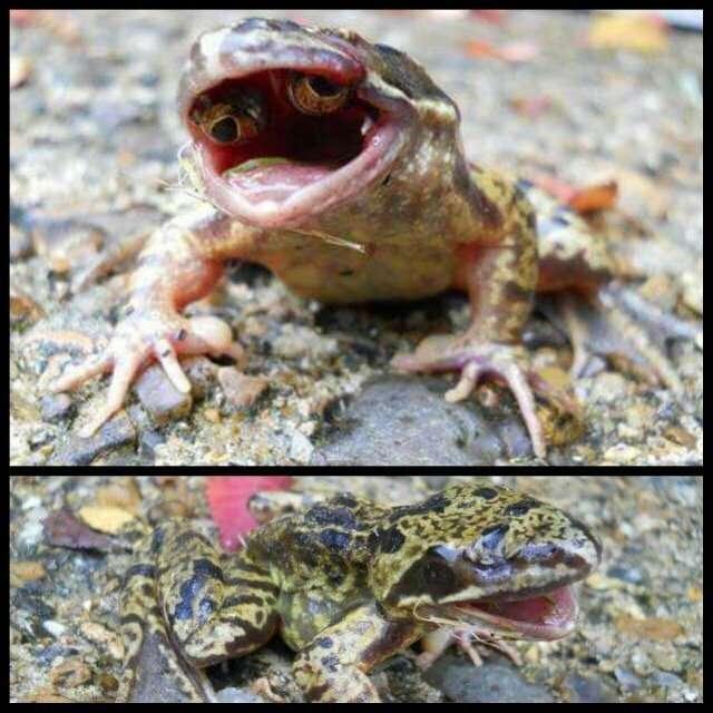 Когда природа страшнее, чем фильмы ужасов! природа
