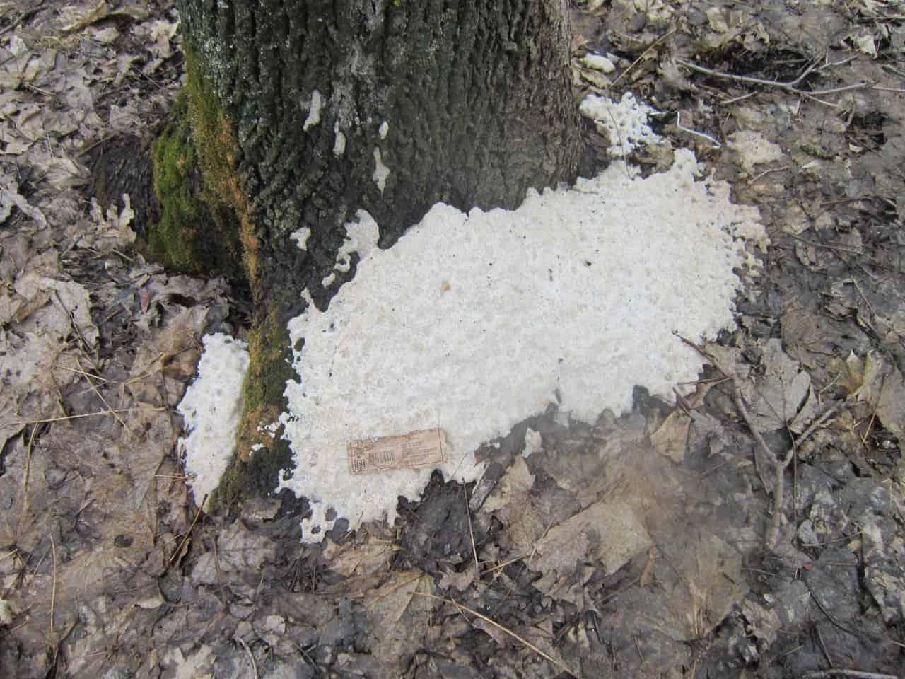 Как засушить и уничтожить дерево на корню незаметно советы