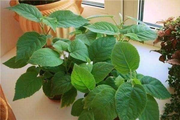 Сейчас лучшее время для посева киви! Вот как вырастить фрукт дома и на даче