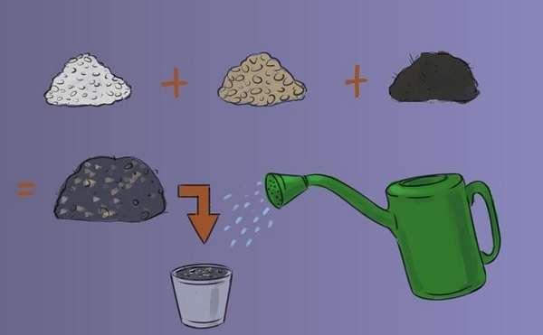 8 правил выращивания базилика в горшках - секреты огородника