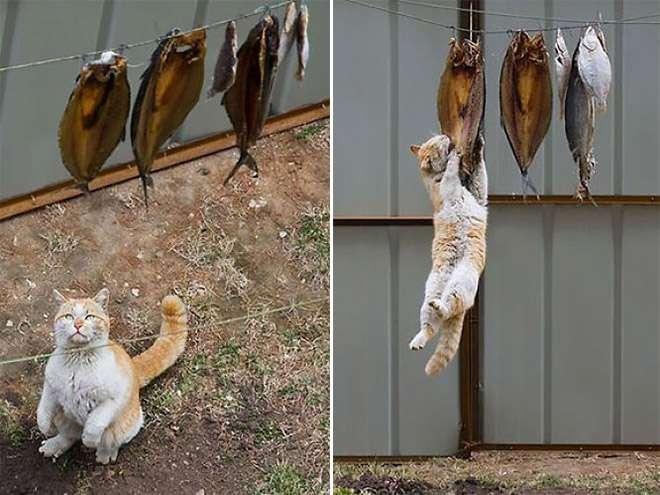 Коты-воришки! 12 питомцев, пойманных на горячем + бонус Приколы,еда,коты,приколы,смешные коты